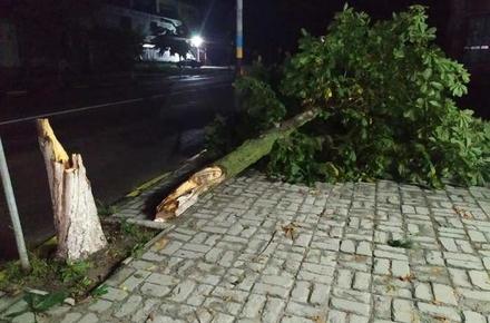 fe86674ea3eec30e9de40884dfb4cce5 preview w440 h290 - У Житомирській області негода поламала дерева та погнула дорожні знаки, без світла лишились 57 населених пунктів
