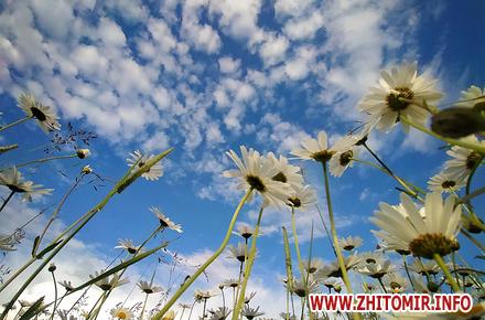 77e93998d1f59b454f400befeed4f232 preview w440 h290 - Квітучий Житомир та околиці. Фоторепортаж