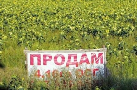 467fa3774597a24ebd650f4c2da67446 preview w440 h290 - Ринок землі: в Житомирській області вже продали 18,1 га