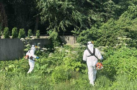 d526988398abaf1c05d97bdc8ea75886 preview w440 h290 - Житомирська міська рада показала, як працівники «Зеленбуду» борються з борщівником