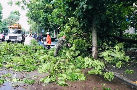 a403459bd819f9285d566578071e1bdc preview w440 h290 - У Житомирі під час негоди дерево впало на чоловіка: постраждалий у лікарні (доповнено)