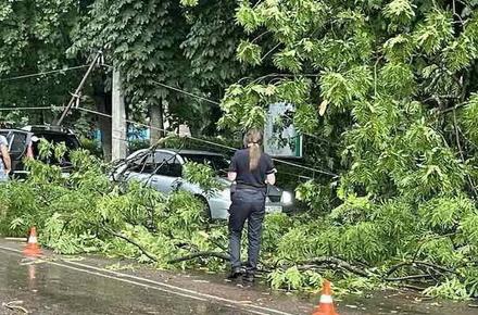 7e476e699e01c38f9365d99317190f53 preview w440 h290 - Подробиці травмування людини у Житомирі під час буревію: дерево впало на чоловіка на вулиці Фещенка-Чопівського