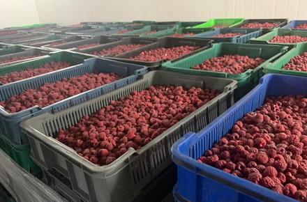 5c0a4577bd623332f1a61053f2828c9f preview w440 h290 - В Житомирській області викрили експортерів, які на ягодах розробили схему ухиляння від сплати податків