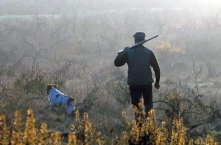0272e072b64dbb79450becd8a6b6cffe preview w440 h290 - У другі вихідні серпня в Житомирській області стартує сезон полювання на дику птицю