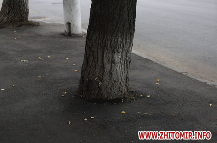 42f19288391f547d68f37db11d9c2fb2 preview w440 h290 - В Житомирі під час ремонту вулиці Ріхтера підрядник закатав в асфальт дерева