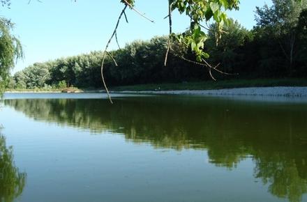 6704b74d268434c510a222e0ce7cff8d preview w440 h290 - В Житомирській області планують до кінця року провести інвентаризацію лісових ресурсів, водних та інших об'єктів