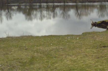 837227e0cc3d5ffbf71f52160ae51726 preview w440 h290 - З річки неподалік Житомира водолази дістали тіло молодого чоловіка