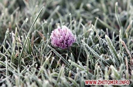 bb43e4b87932b5b4a5939ea5ff9865ff preview w440 h290 - У Житомирській області очікуються перші заморозки на ґрунті