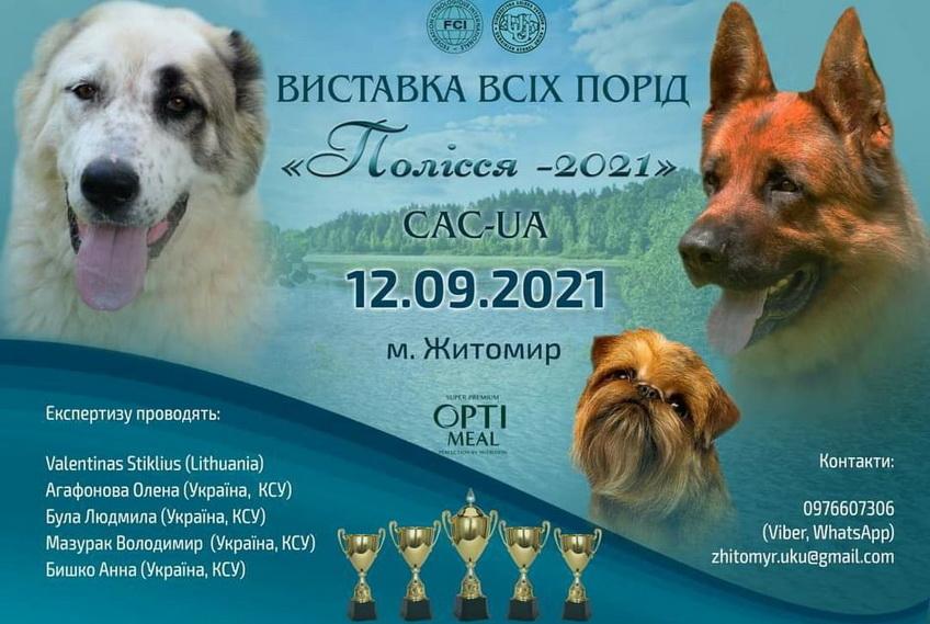 613614d6c8b46 original w859 h569 - Близько 80 порід, понад пів тисячі учасників: у Житомирі відбудеться всеукраїнська виставка собак