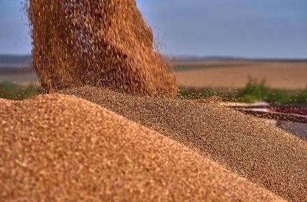 55ee670c64ad5524399bdc386bf9b818 preview w440 h290 - У Житомирській області посадовець фірми, який «заробив» 815 тис. грн на продажі чужого зерна, отримав 6 років ув'язнення