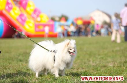 a4ccaa0c80e32fdd8eaeaa523cd59141 preview w440 h290 - Рідкісні та популярні, великі та маленькі: Всеукраїнська виставка собак усіх порід у Житомирі. Фоторепортаж