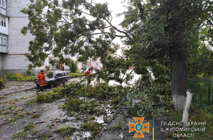 257bc3690b24f1956e30bede9949ea9f preview w440 h290 - У Житомирській області рятувальники прибирали аварійні дерева, що попадали на проїзні частини