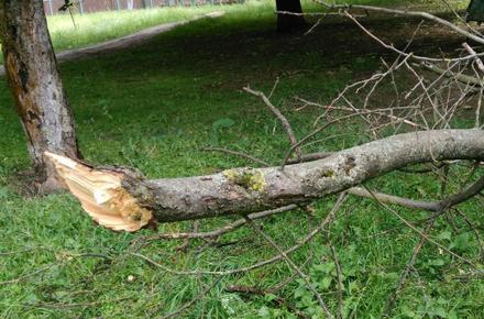 aa175e83af19e848cbd45462c5ffb9a3 preview w440 h290 - В Житомирській області гілка дерева вбила чоловіка