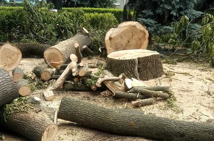 5e544616cf2aacb78000556358cf1ae1 preview w440 h290 - У житомирському парку та гідропарку зріжуть майже 60 аварійних дерев: тендер виграв підприємець з Донеччини